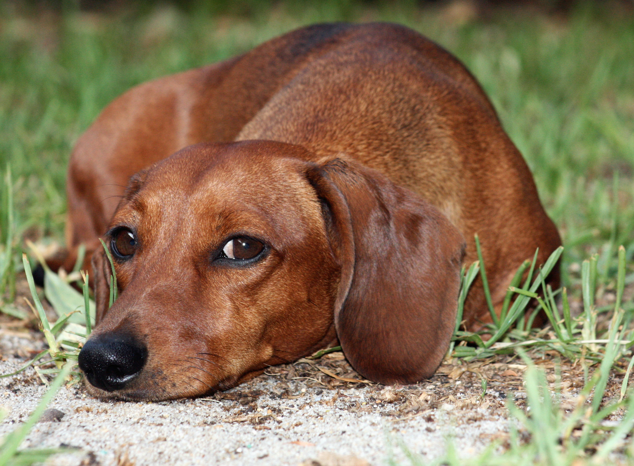 Urinate doxies